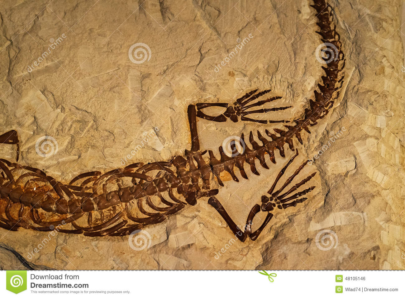 Fossil Of Ancient Reptile In Rock Stock Photo