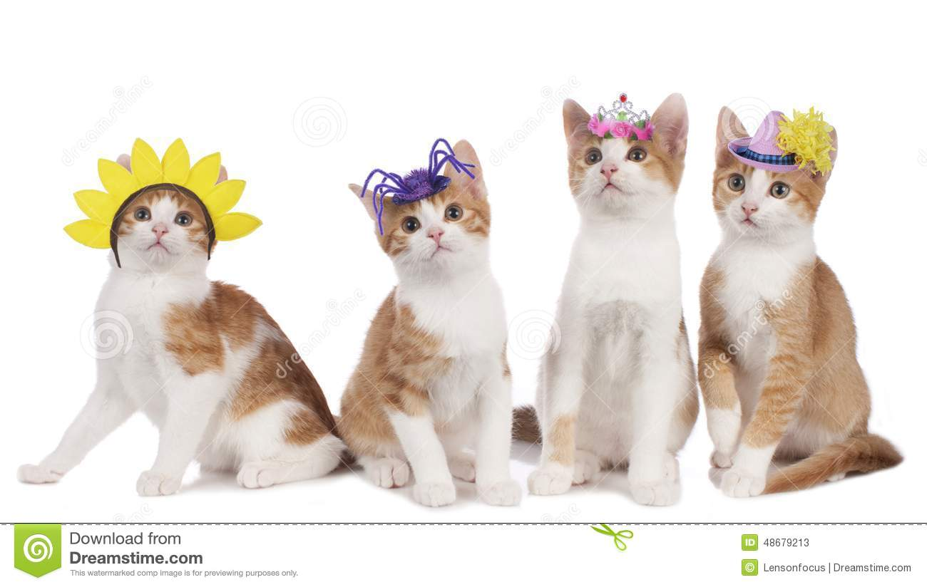 Four Funny Cats With Carnival Hats Stock Image Image Of