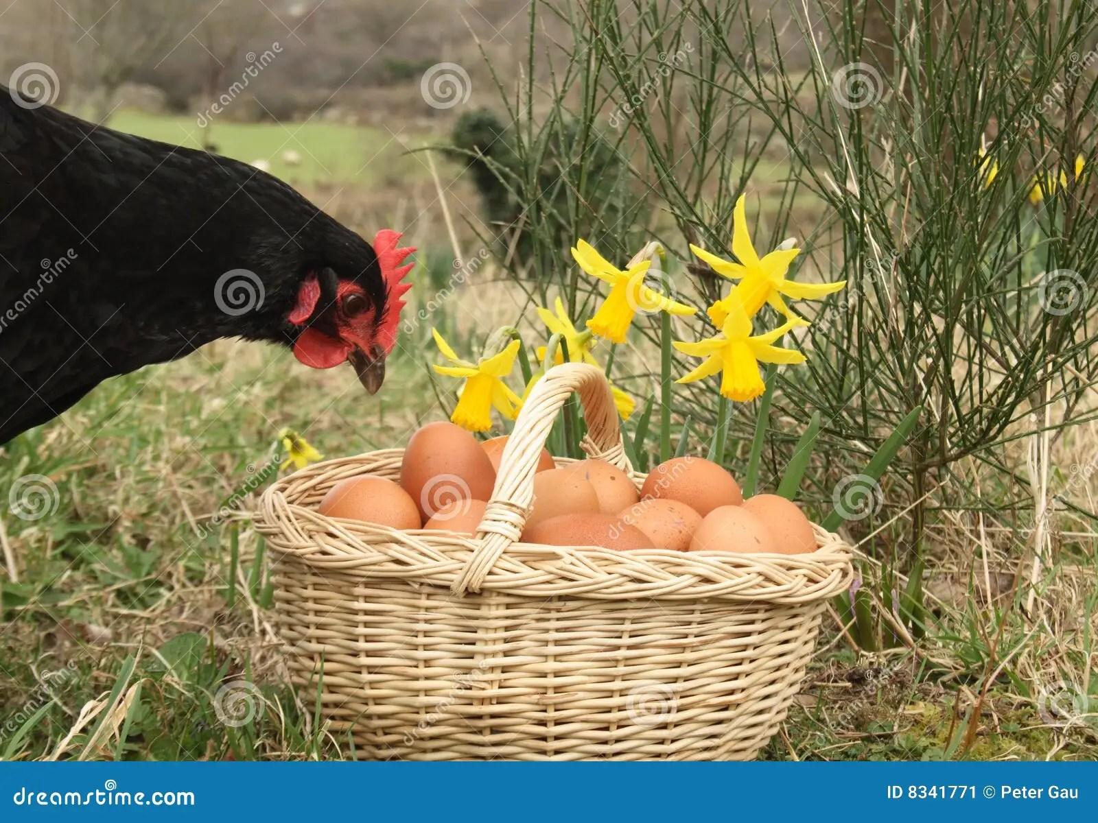 Egg Basket For Fridge