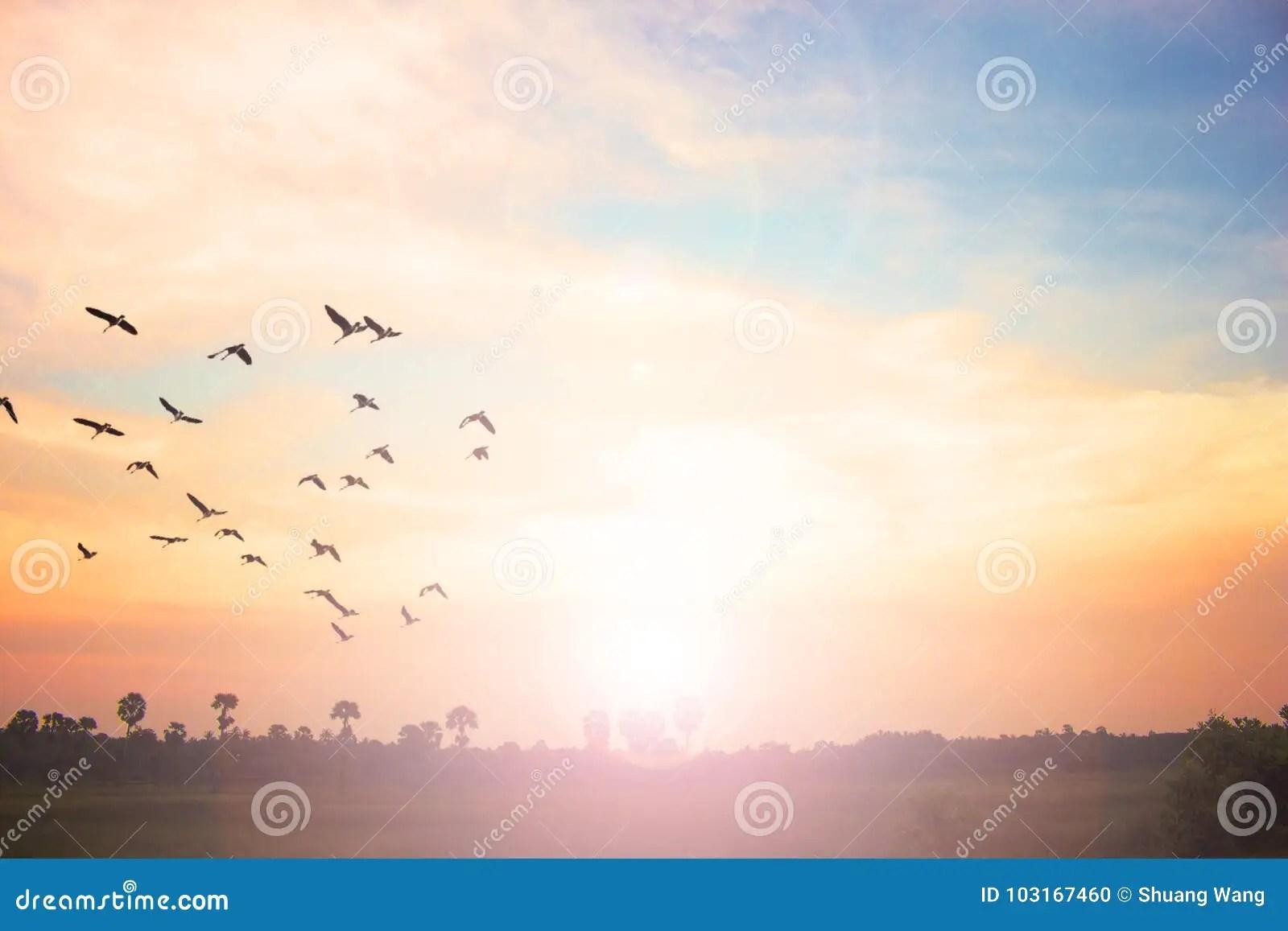 free flight of birds