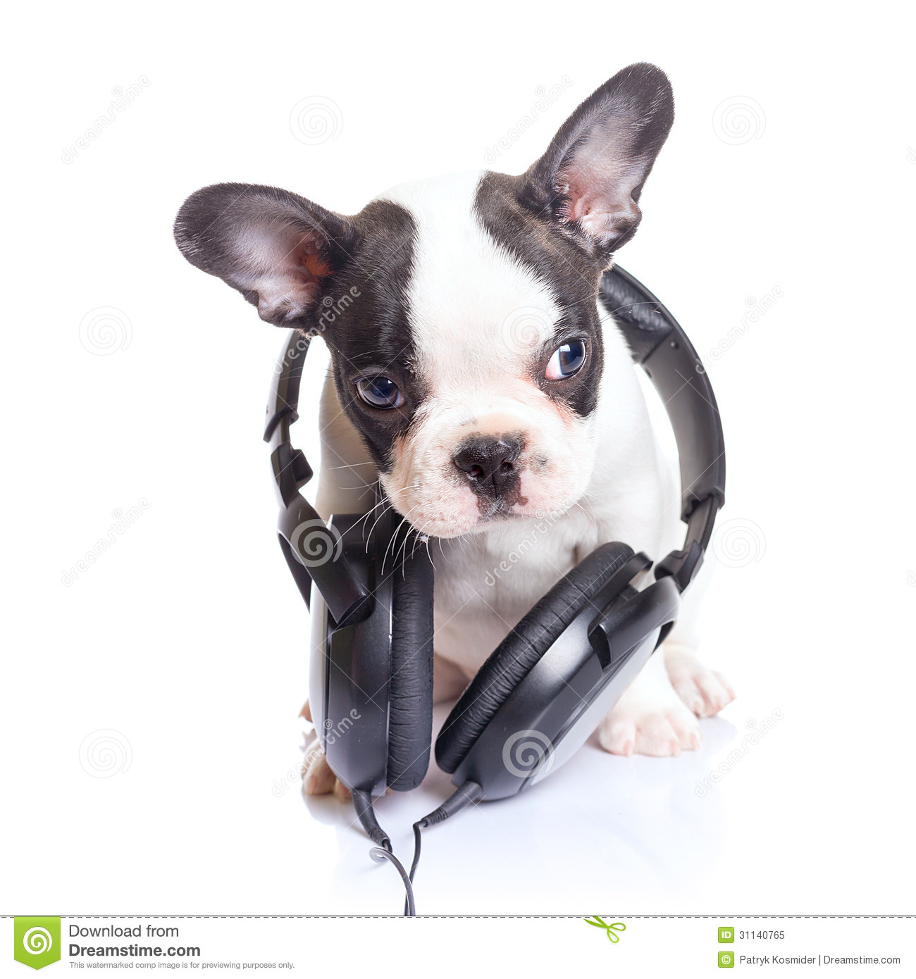 Cute Earphones Wallpaper French Bulldog Puppy With Headphones Stock Image Image
