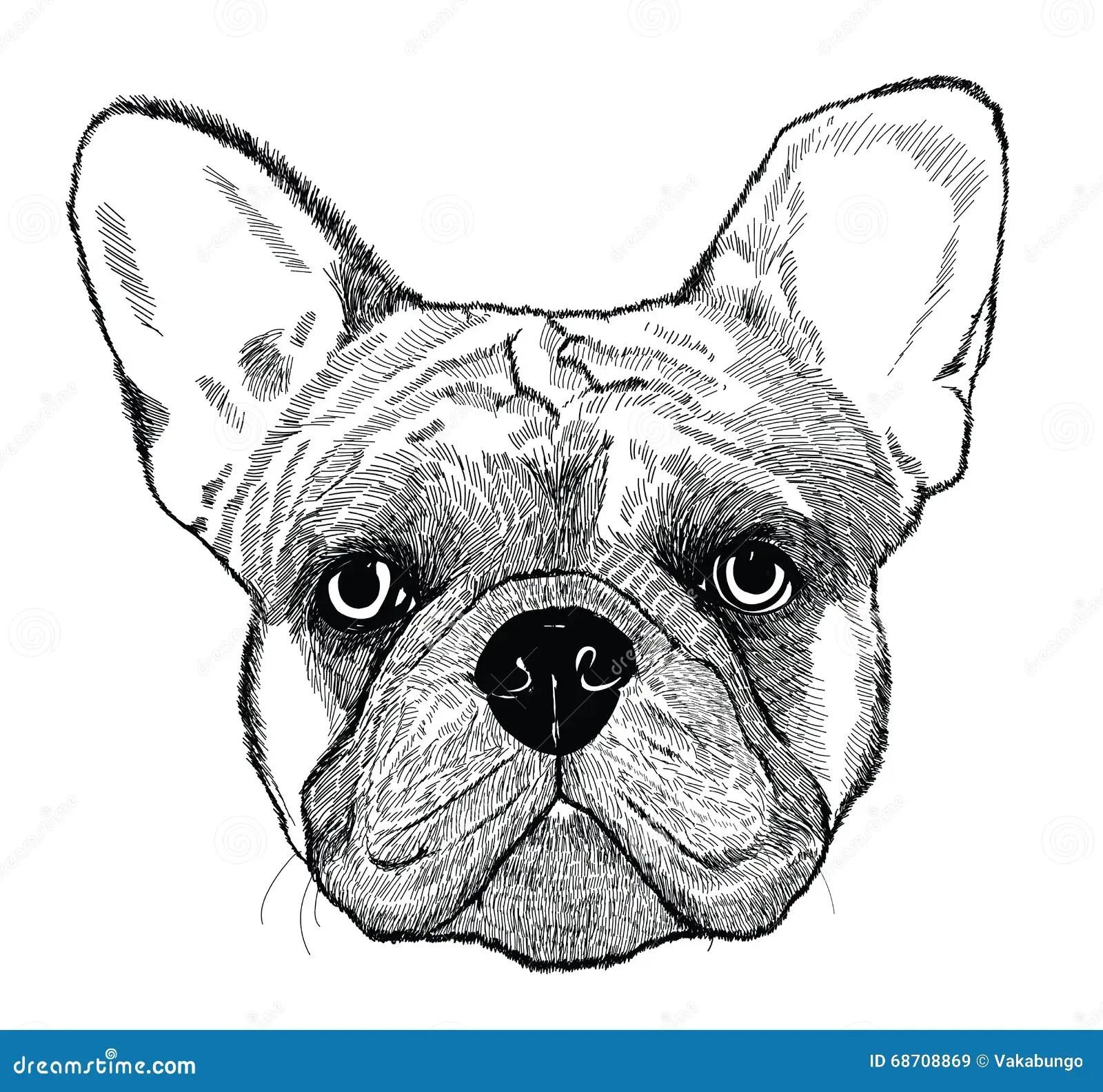 English Bulldog Vector Illustration Vector Illustration