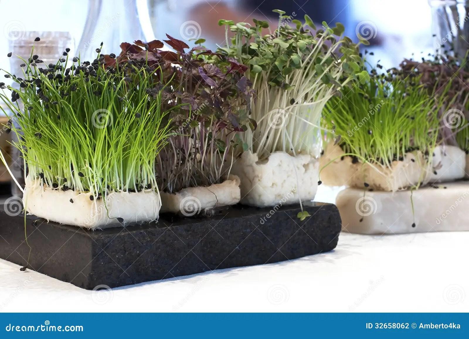 Fresh green watercress stock photo Image of ingredient