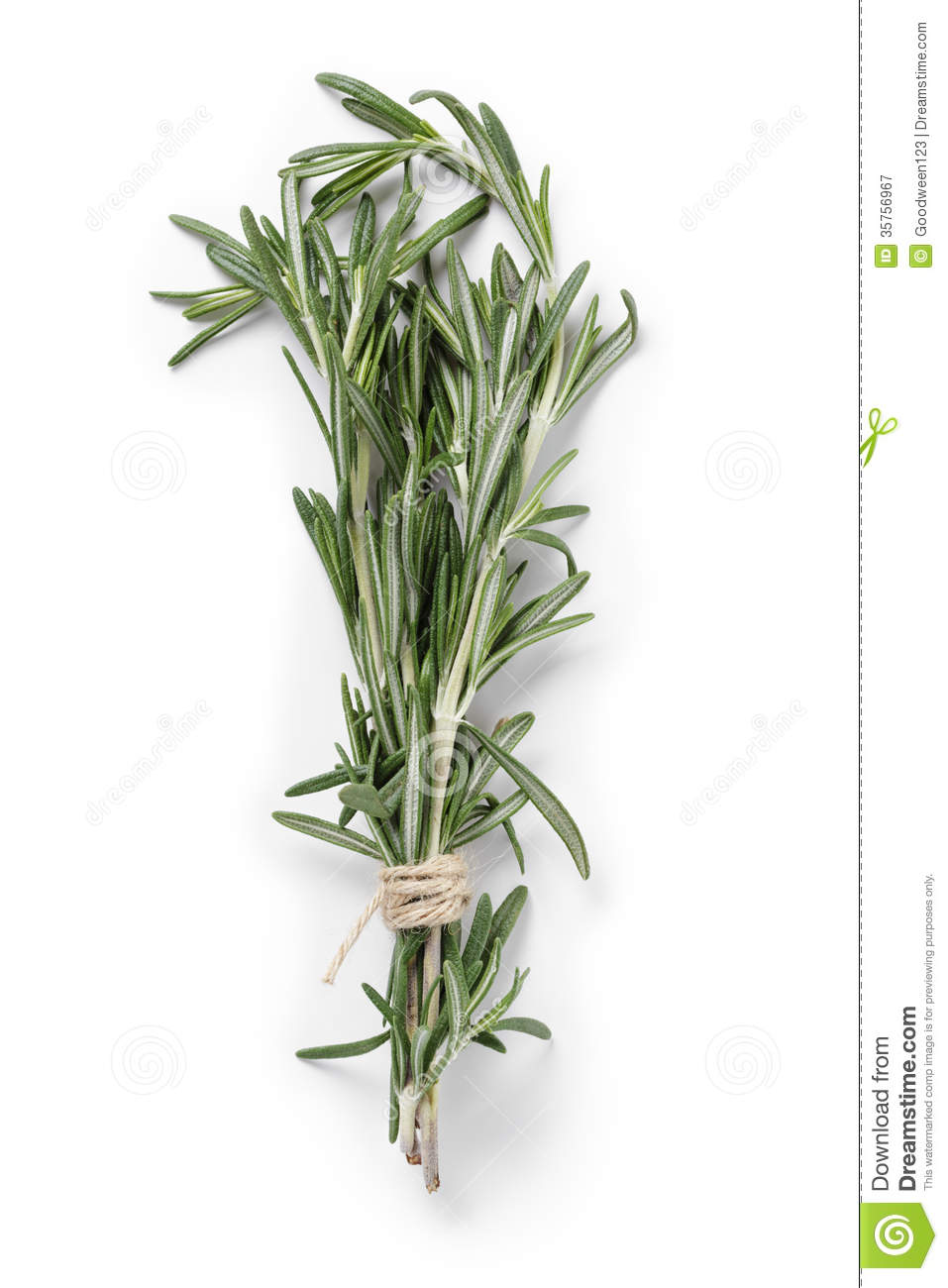 hight resolution of fresh rosemary bunch