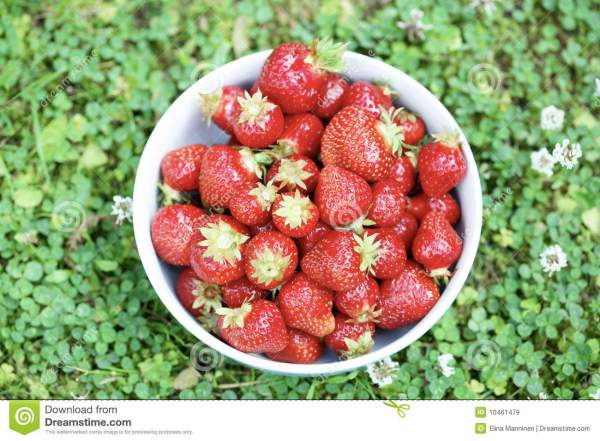 Fresh Strawberries In A Bowl Royalty Free Stock Images