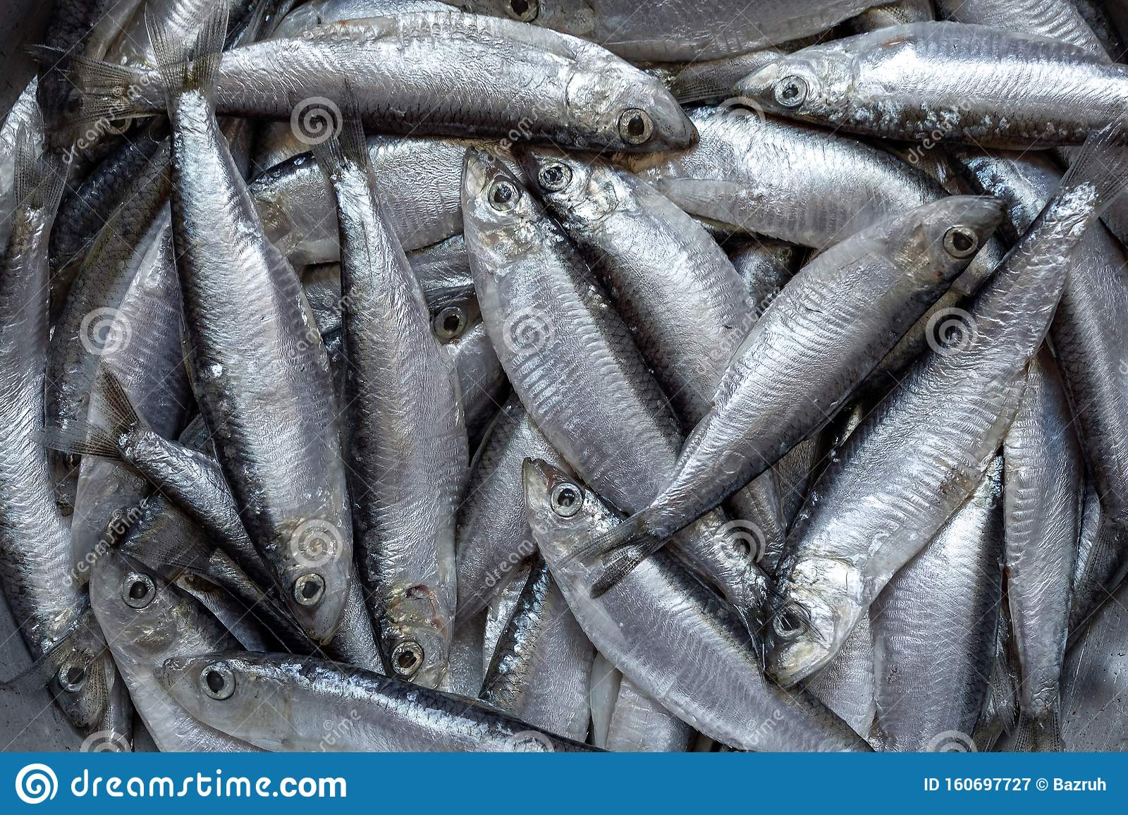 Freshly caught sprat fish stock image. Image of gourmet - 160697727