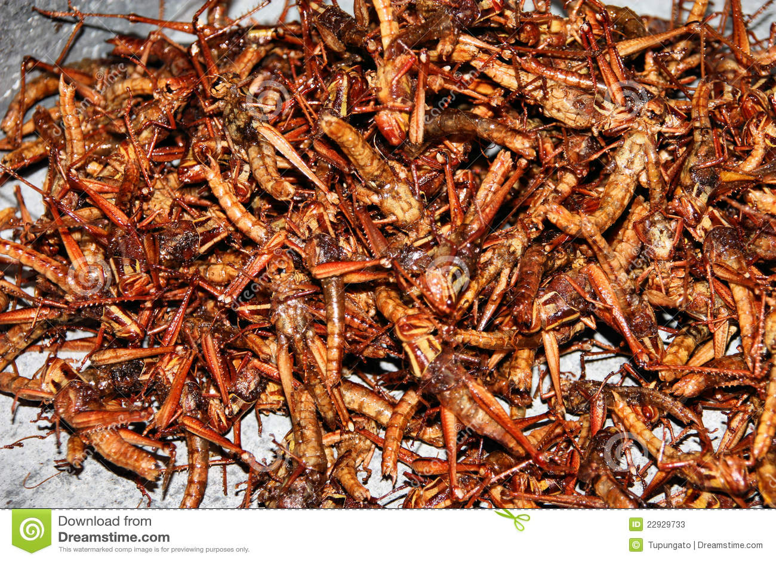 Fried Crickets Stock Photos  Image 22929733
