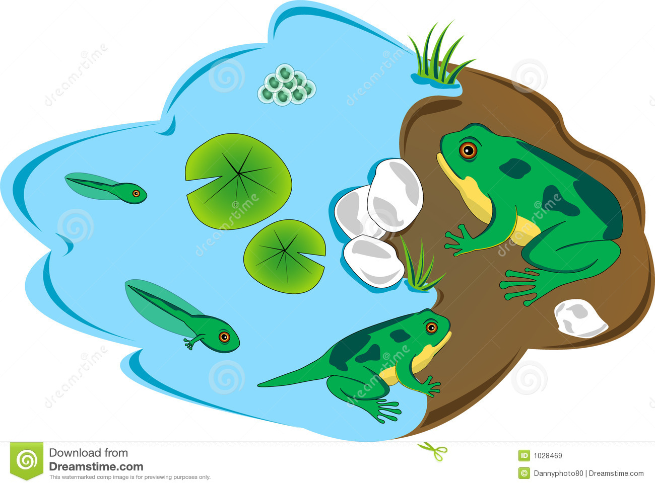 Frog Lifecycle Stock Illustration Illustration Of Cycle