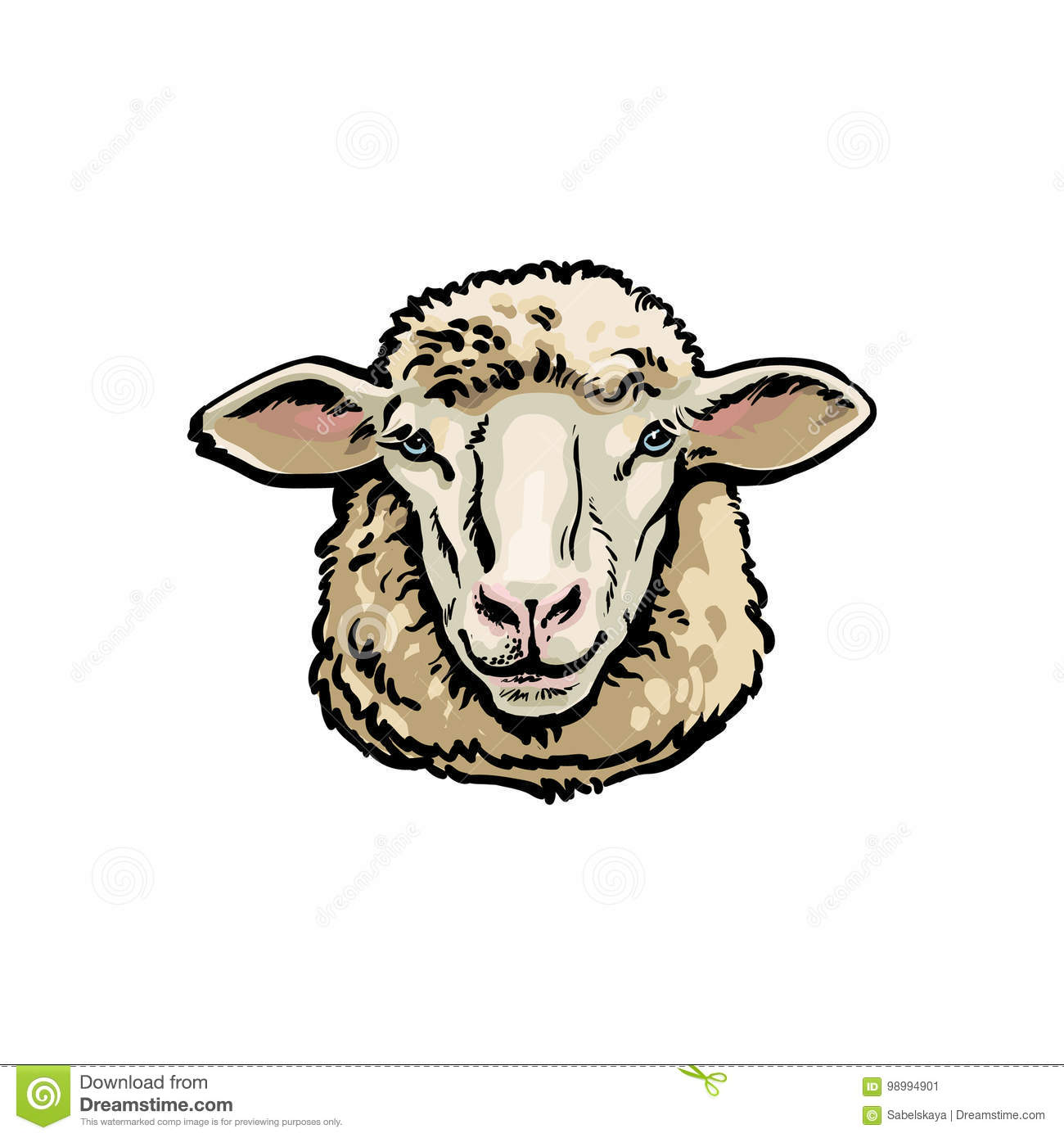 Front View Sketch Portrait Of Domestic Farm Sheep Stock