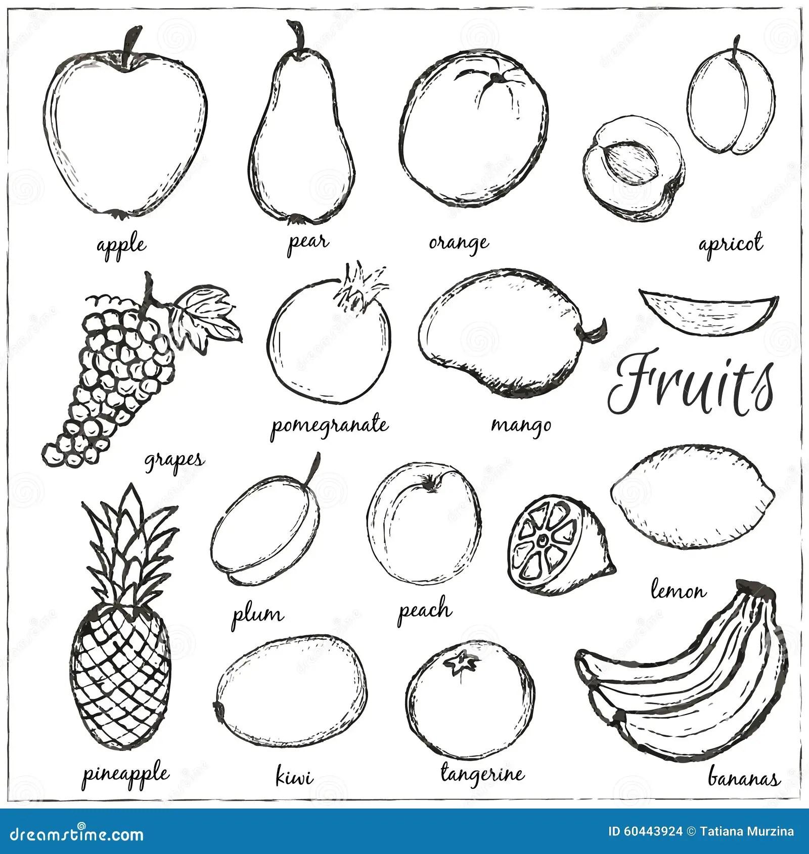 Fruits Tires Par La Main De Griffonnage Avec Le Nom