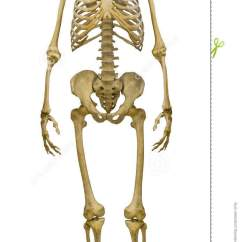 Bones Human Skeleton Diagram Back Basic Electrical Wiring Diagrams Home Full-face On White Stock Photo - Image Of Inside, Isolated: 33122104