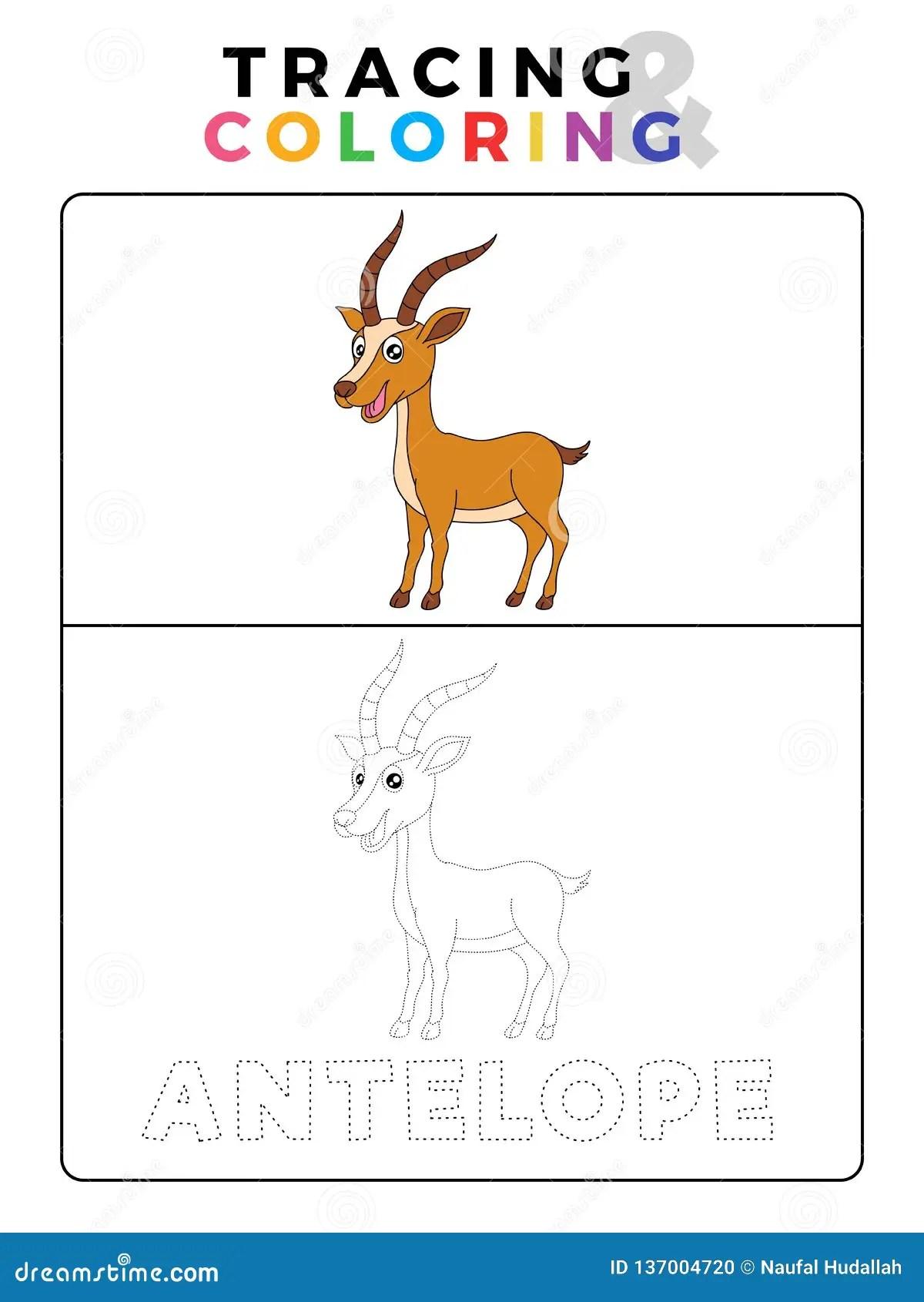 Coloring Book Deer Pictures
