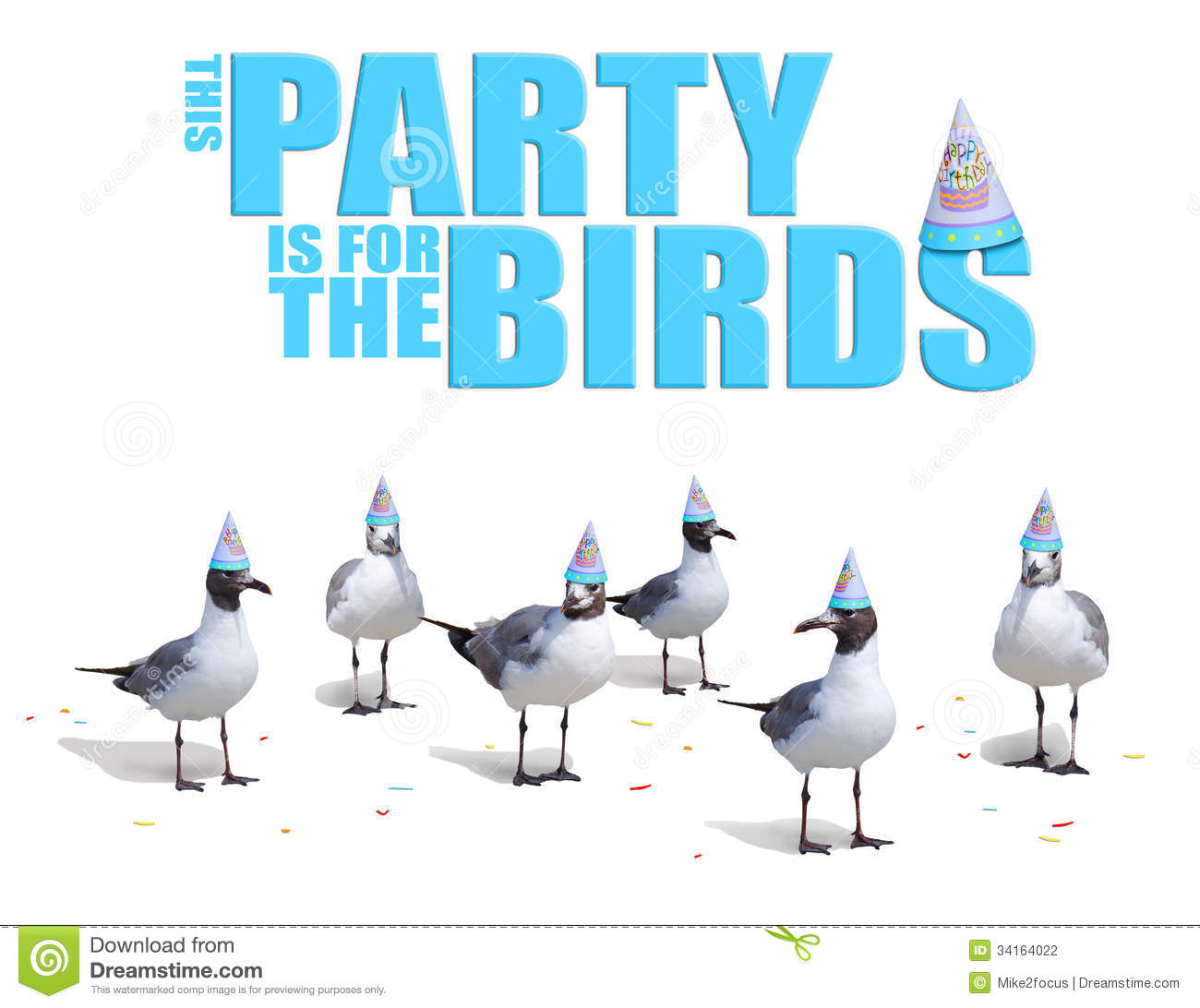 Funny Birds Wearing Birthday Party Hats Card Stock