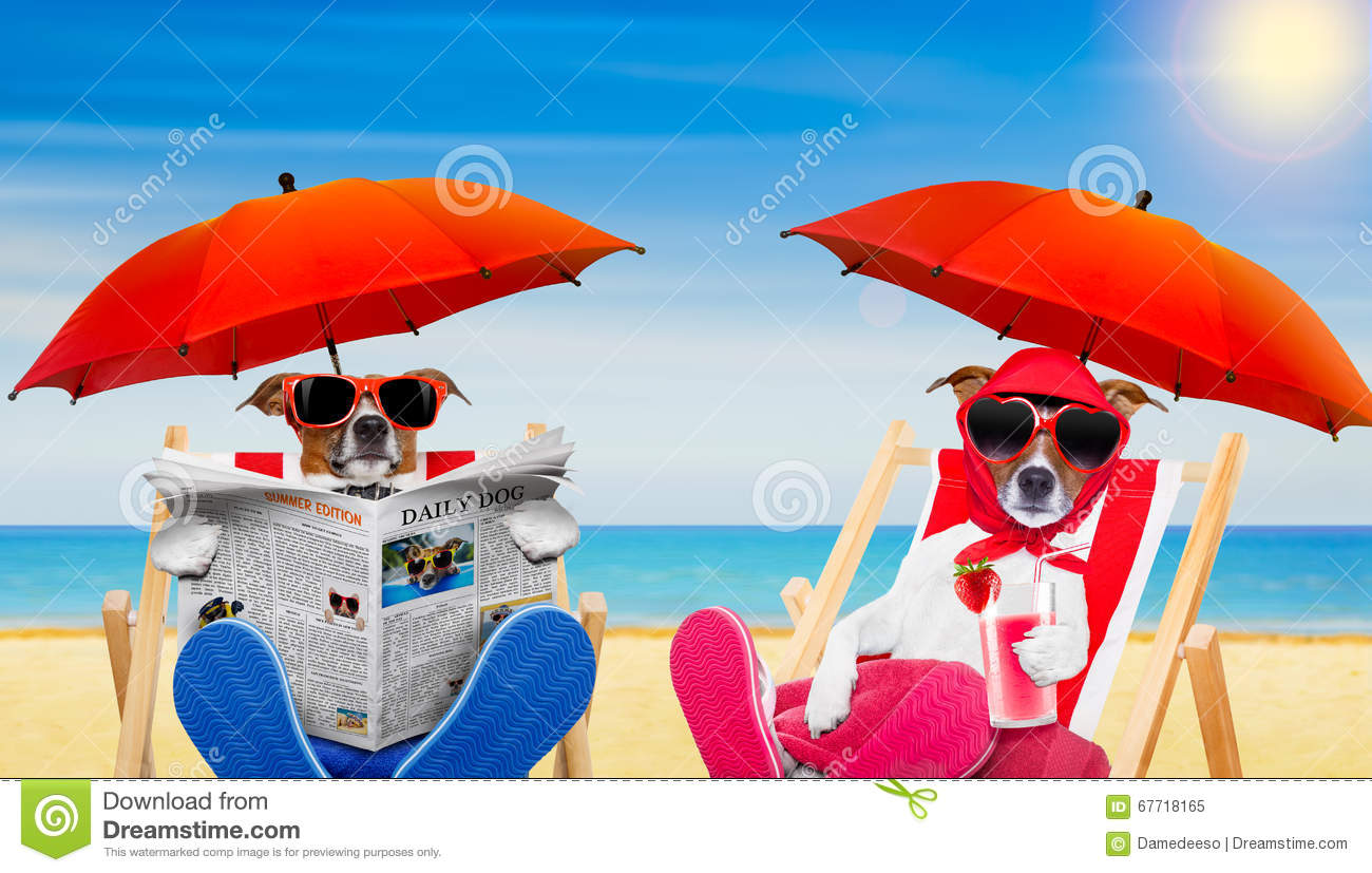 Funny Couple Of Dogs In Love At The Beach Stock Image