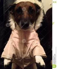 Dog With Winter Clothes Stock Photography | CartoonDealer ...