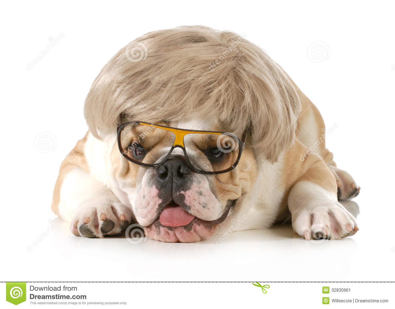 Cute Glasses Wallpaper Funny Dog Stock Image Image Of Canine Portrait Card