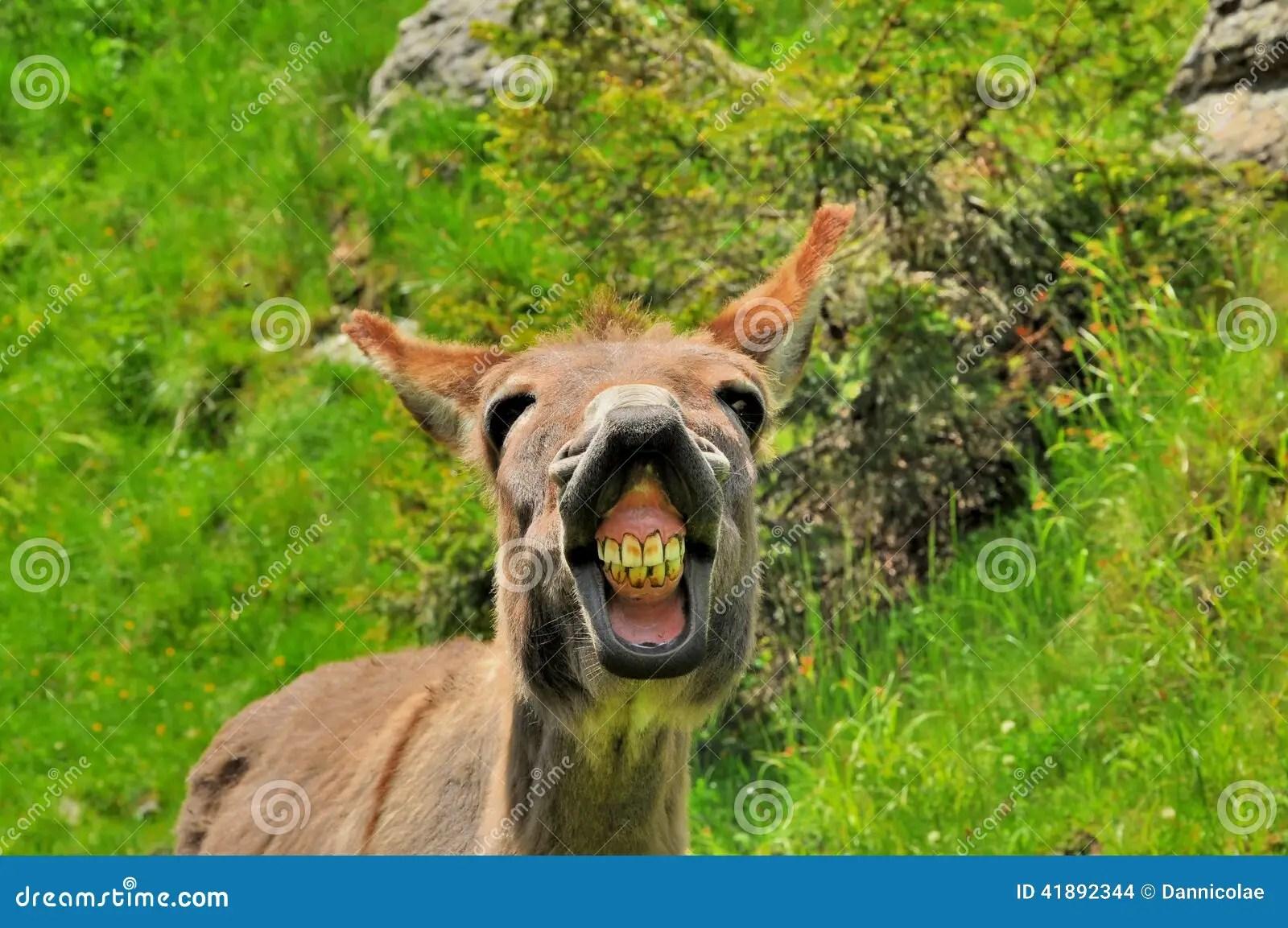 Cute Donkey Wallpaper Funny Donkey Stock Photo Image Of Donkey Grey Happy