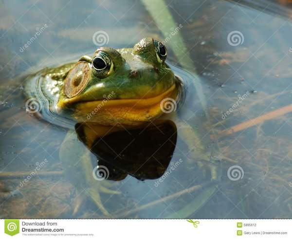 Funny Frog Face With Copy Space Stock