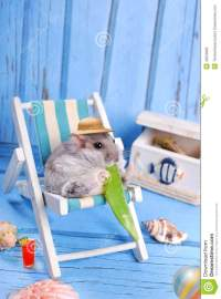 Funny Hamster Relaxing On Summer Holidays Stock Photo