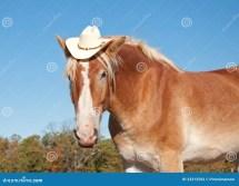 Funny Of Blond Belgian Draft Horse Stock