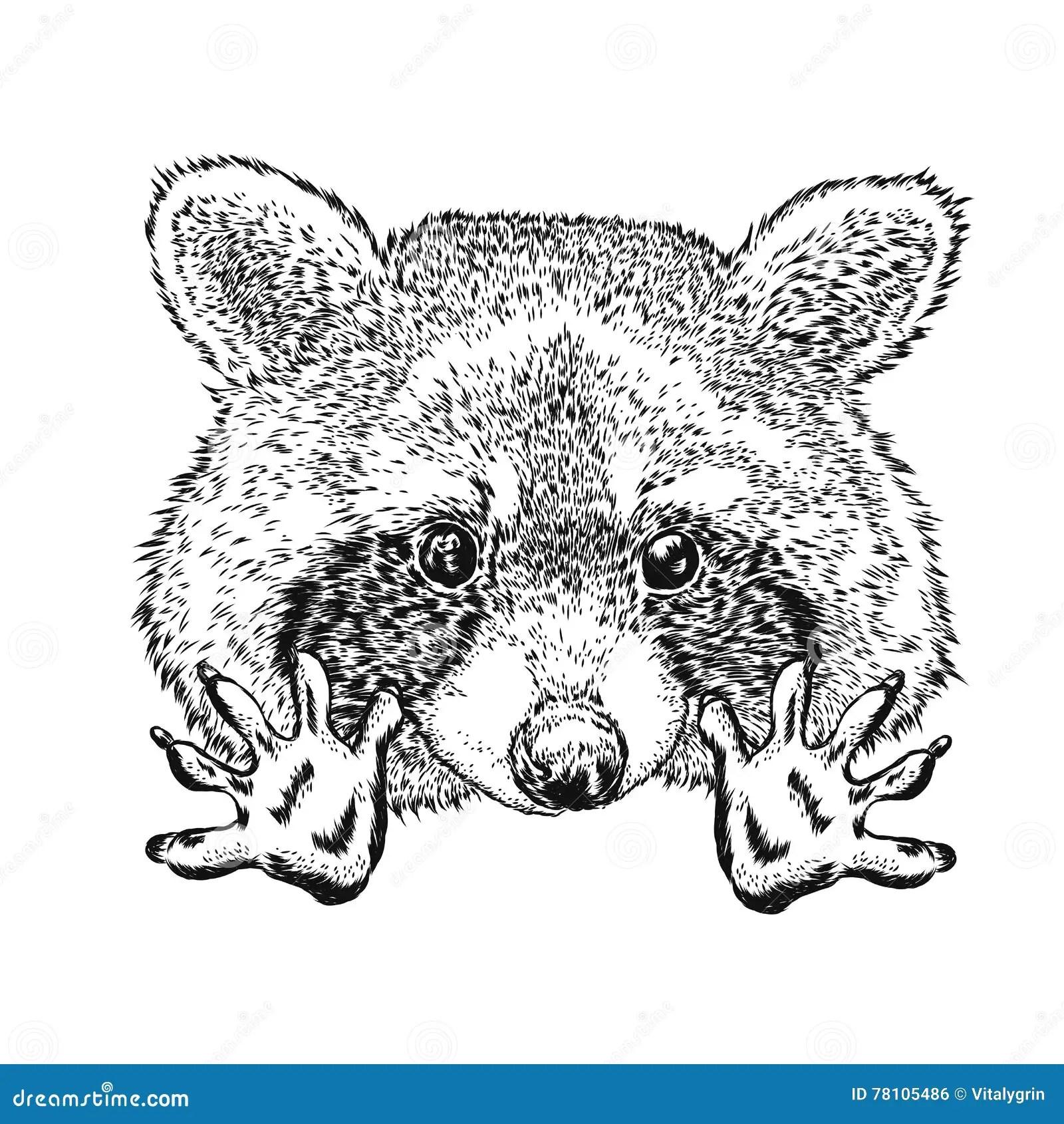 Funny Raccoon Vector Illustration