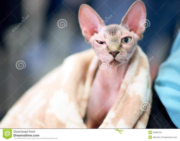 20 Sphynx Funny Cat Memes Pictures And Ideas On Carver Museum