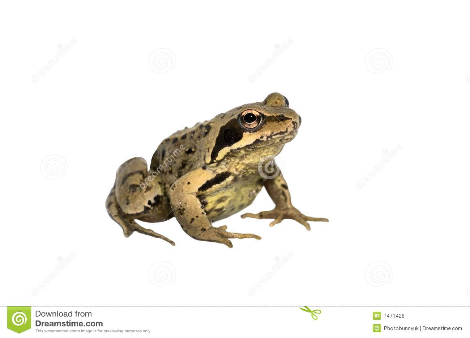 Garden Toad Stock Photo Image Of Common Slimey Creepy