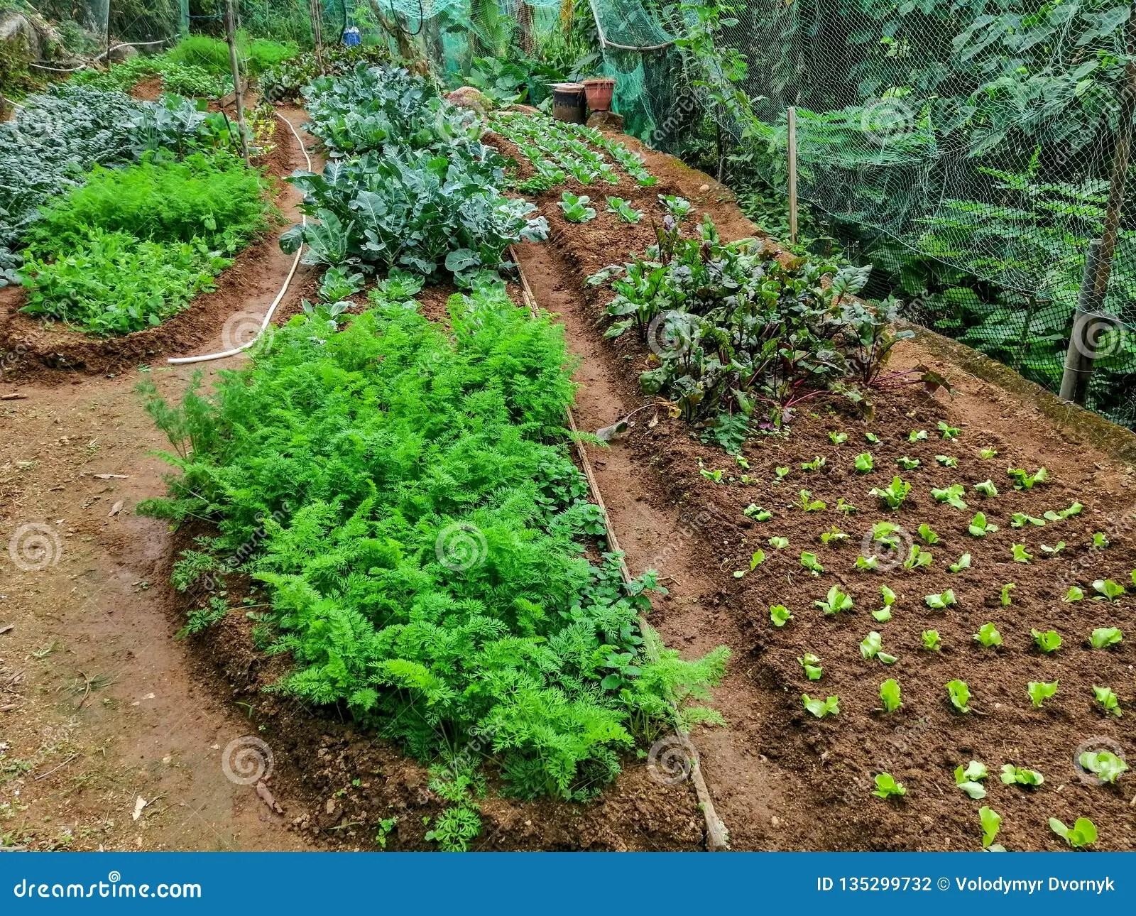An Organic Farm On The Lantau Island. Hong Kong Stock Photo - Image of local. brown: 135299732