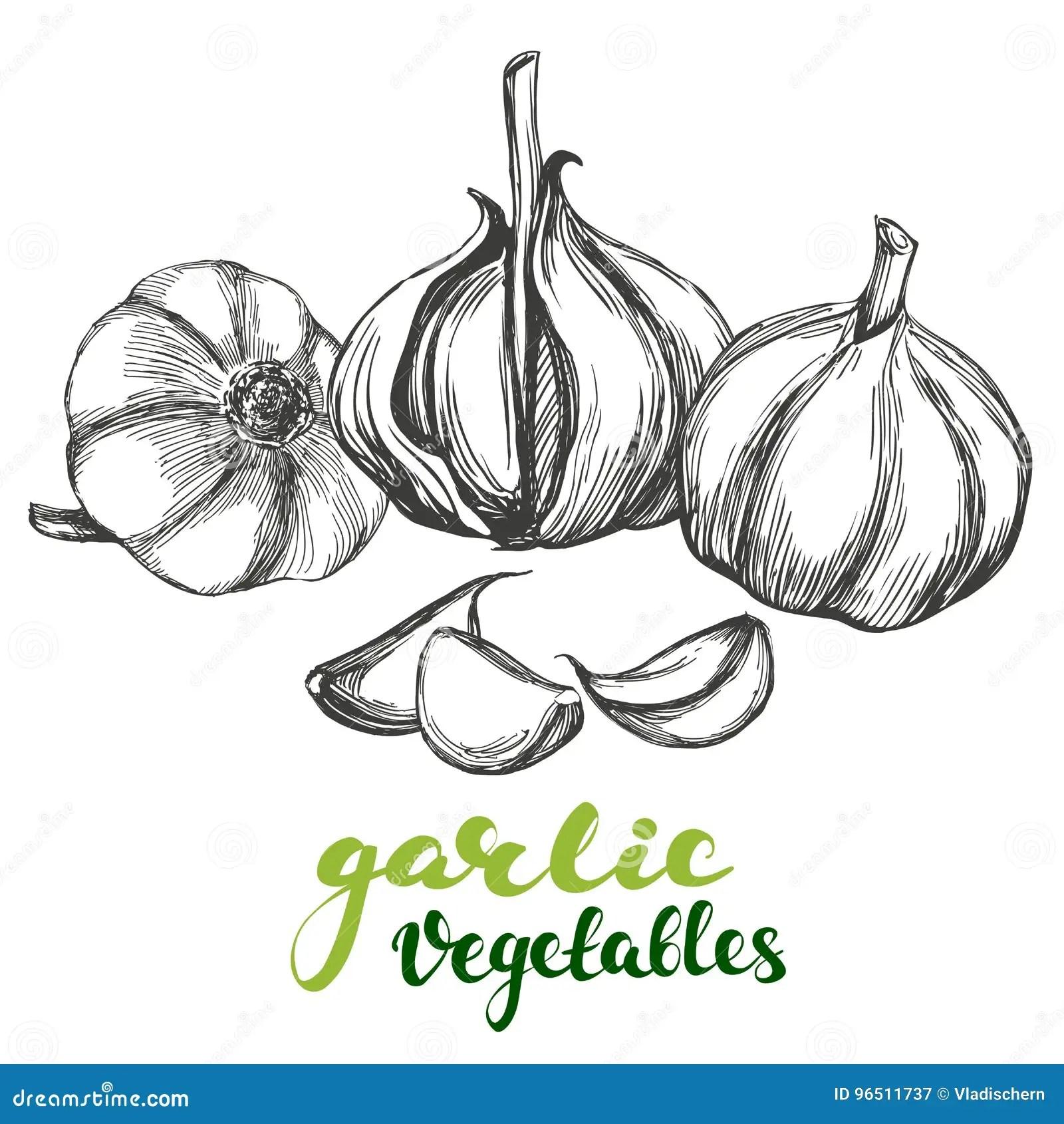 99+ Garlic Set Royalty Free Vector Image Vectorstock