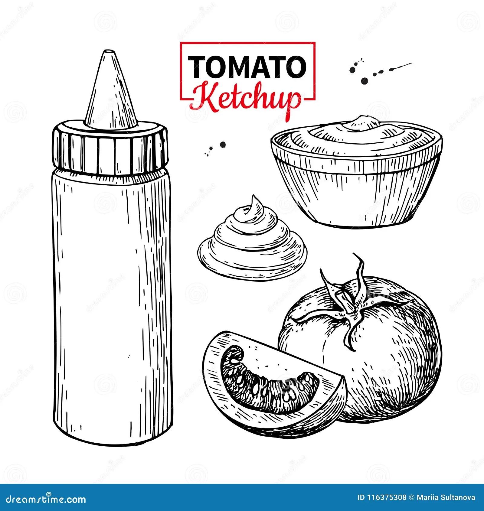 Ketchup Ilustracoes Vetores E Clipart De Stock 16 355
