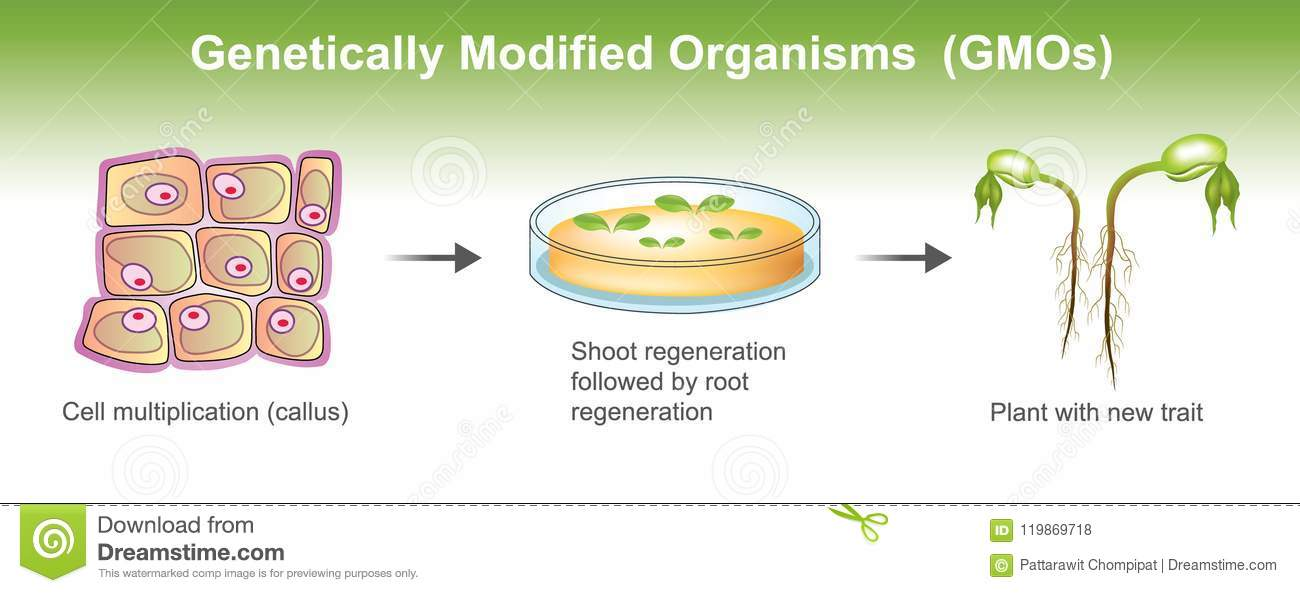 Genetically Modified Organisms Stock Illustration ...