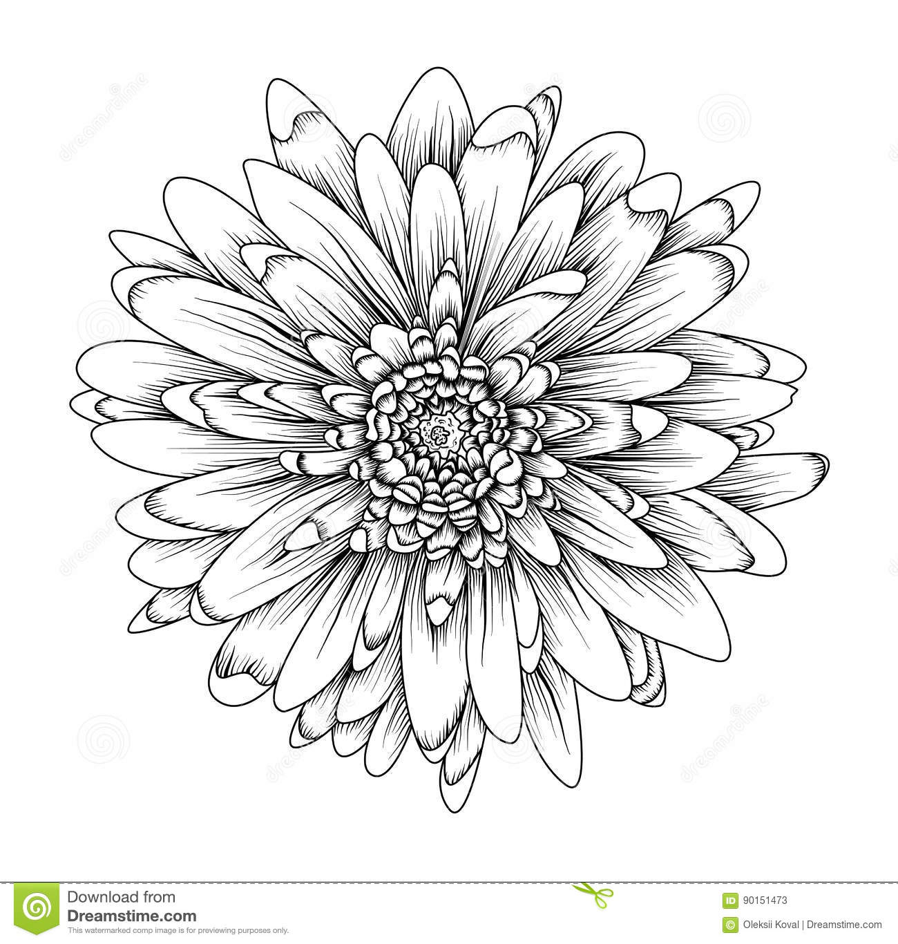 Chrysanthemum Clip Art Outline