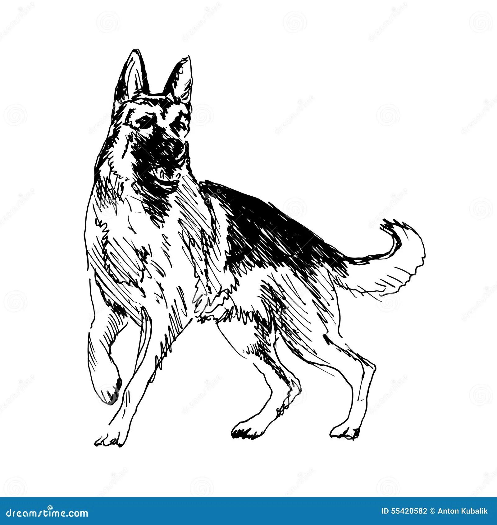 German Shepherd Stock Vector Illustration Of Copy German