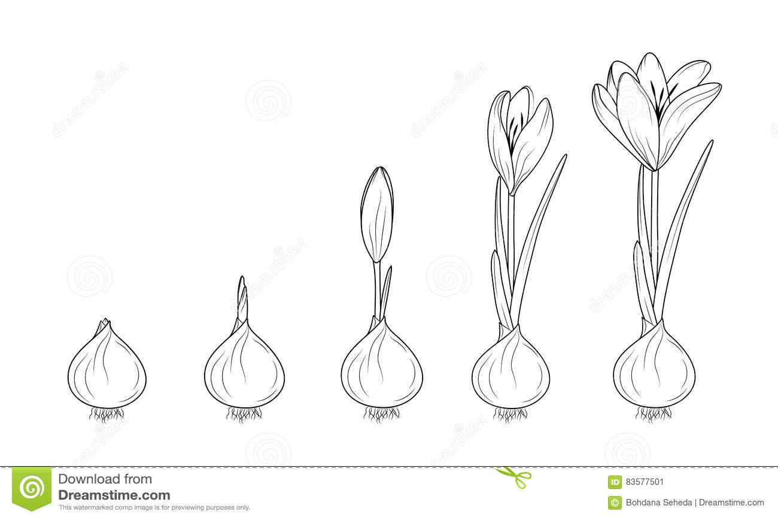 Plant Growth Diagram