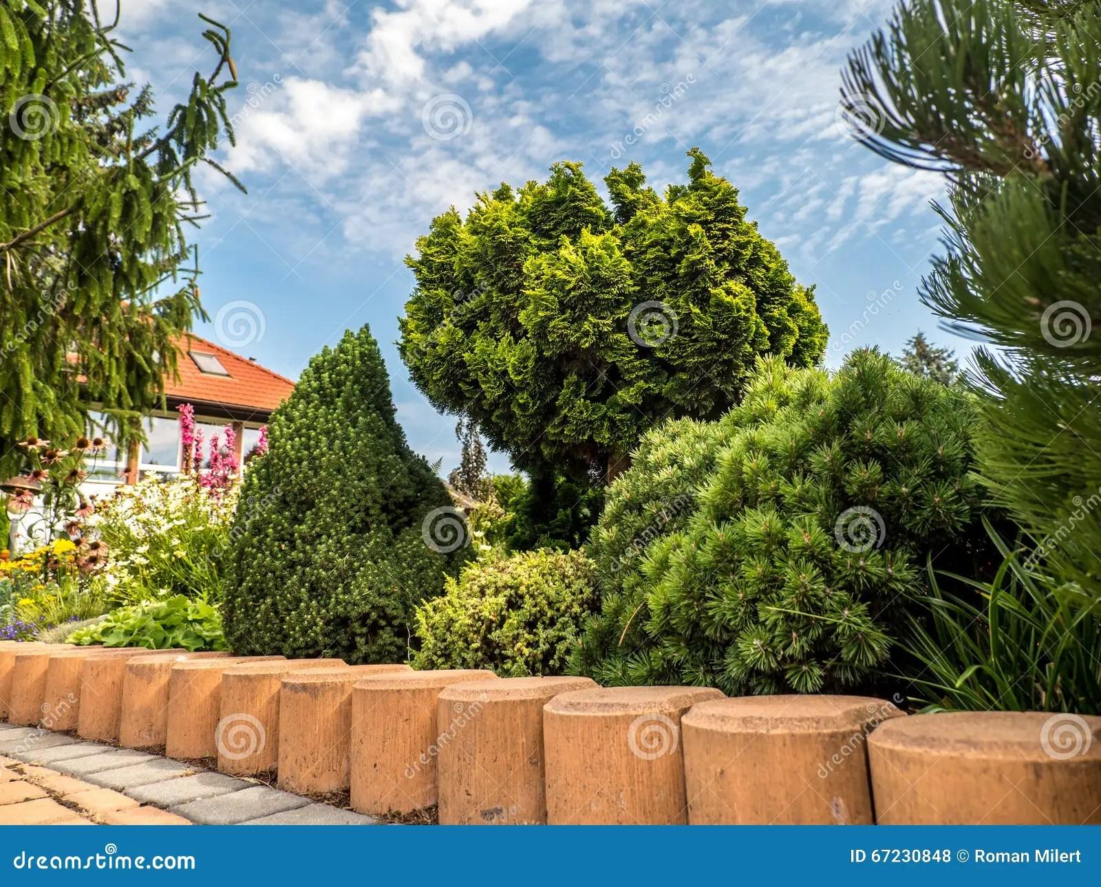 Giardino Con Il Gruppo Di Piante Conifere Fotografia Stock