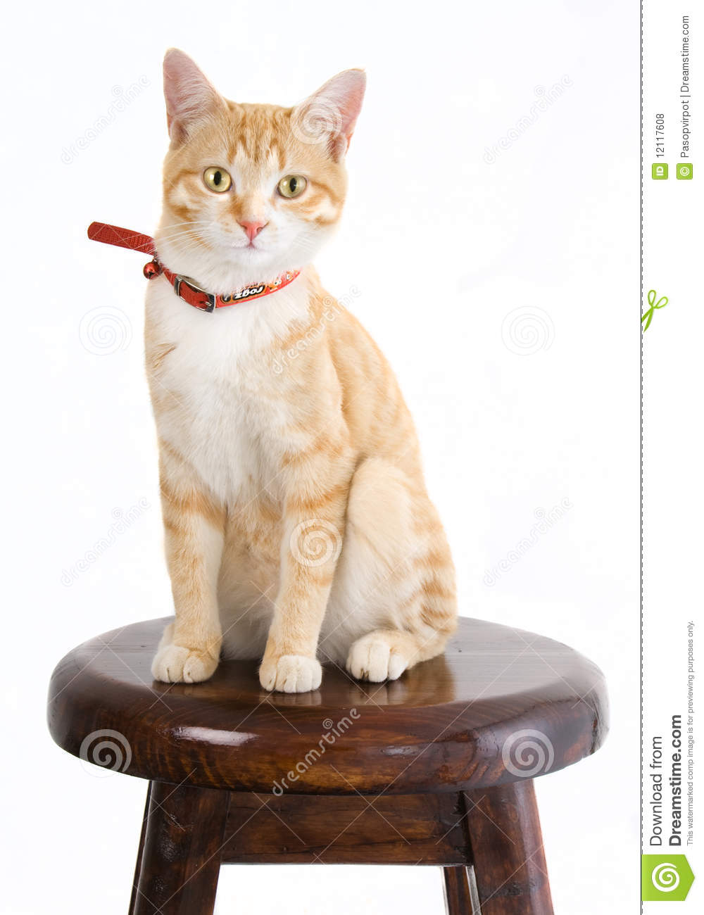 Ginger Cat On Chair Royalty Free Stock Photos  Image
