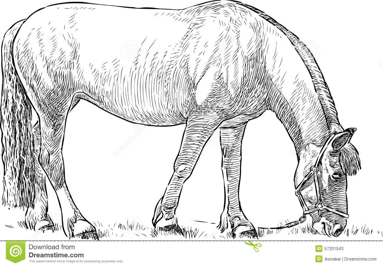 Grazing Horse Stock Vector Image Of Livestock Hand