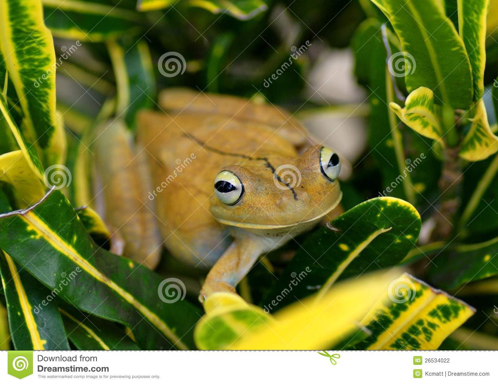 Uncommon Animals Tropical Rainforest