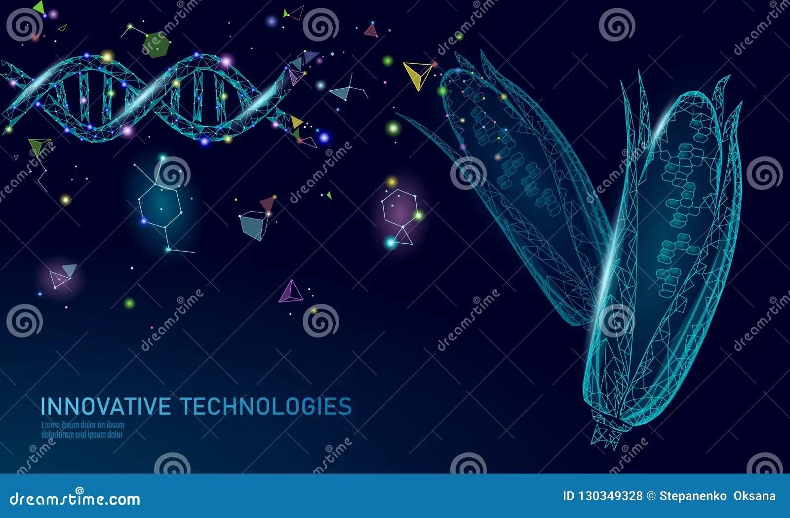 Gmo Corn Gene Modified Plant Science Chemistry Biology