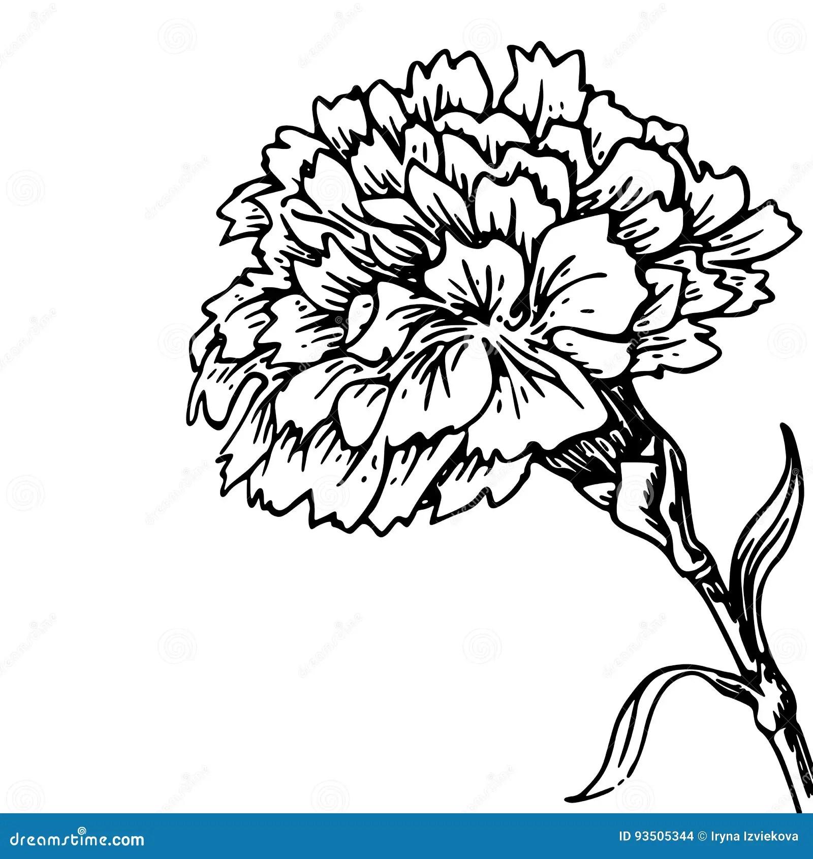 Go Dzika Kwiat
