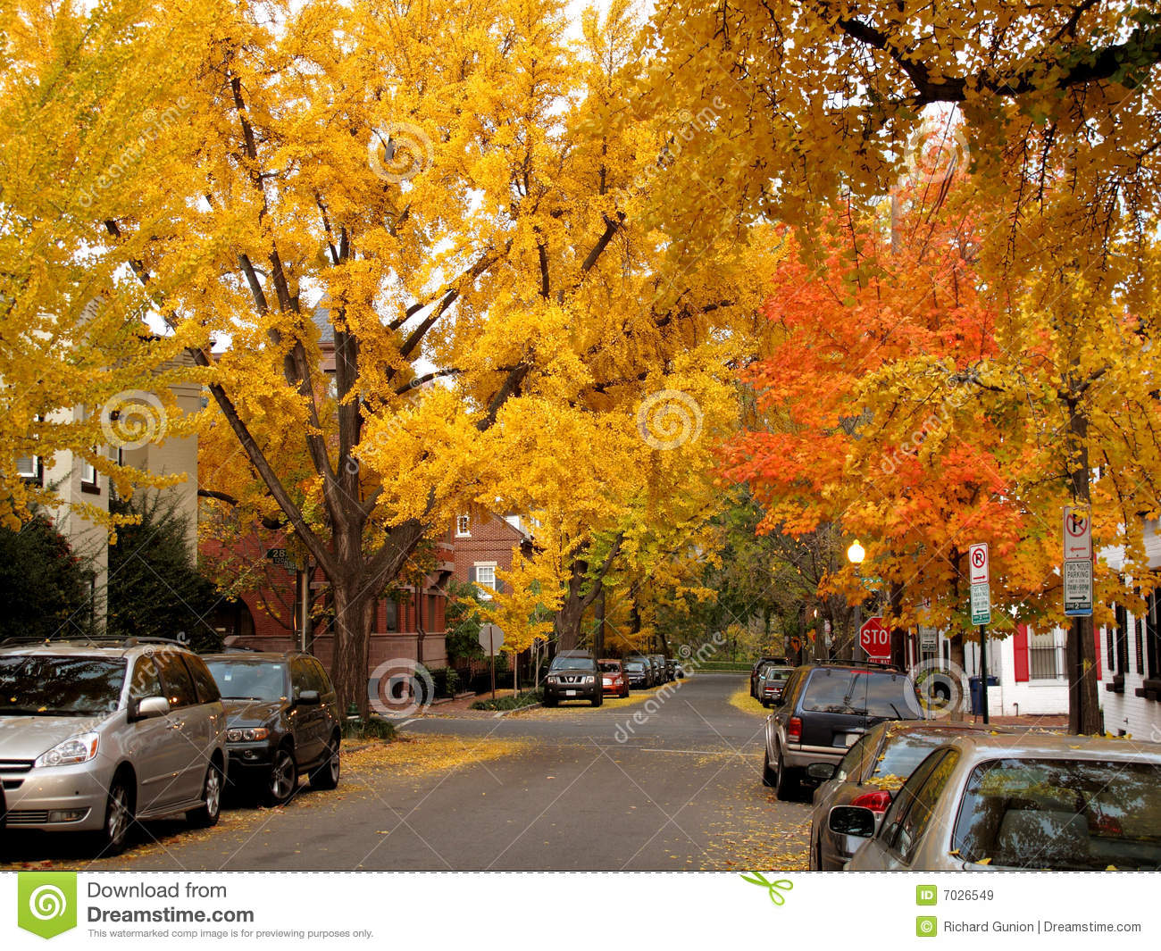 Early Fall Wallpaper Golden Autumn In Georgetown Stock Image Image Of Yellow
