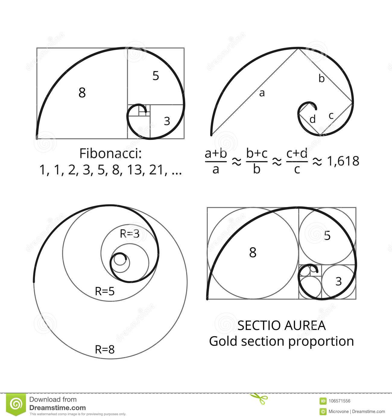 Golden Fibonacci Ratio Spirals. Gold Section Proportion