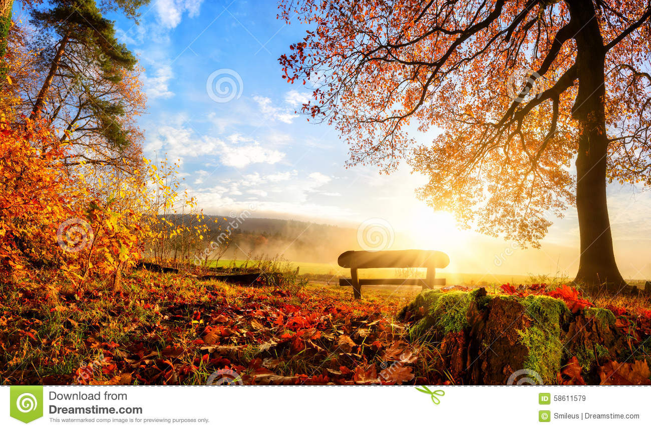 Vector Wallpaper Fall Colors Gorgeous Autumn Scenery Stock Photo Image 58611579