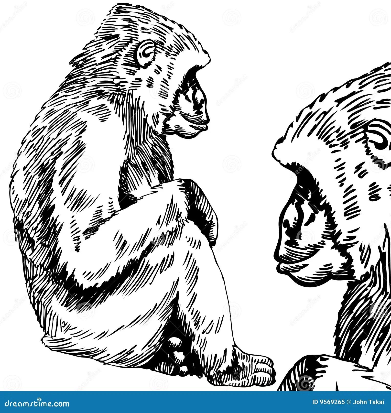 Gorilla Monkey Sketch