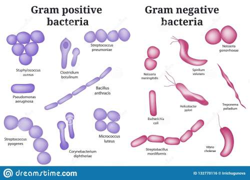 small resolution of arrangements of bacterial microorganism gram positive and gram negative bacteria isolated on white
