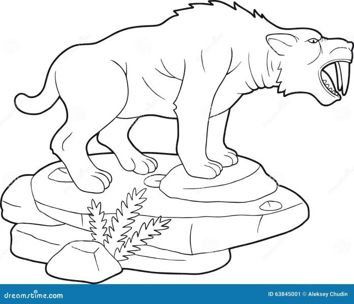 Disegni Da Colorare Tigre Dai Denti A Sciabola Coloradisegni