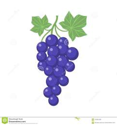 grapes clipart cartoon with vine and leaves purple grapevine  [ 1300 x 1390 Pixel ]