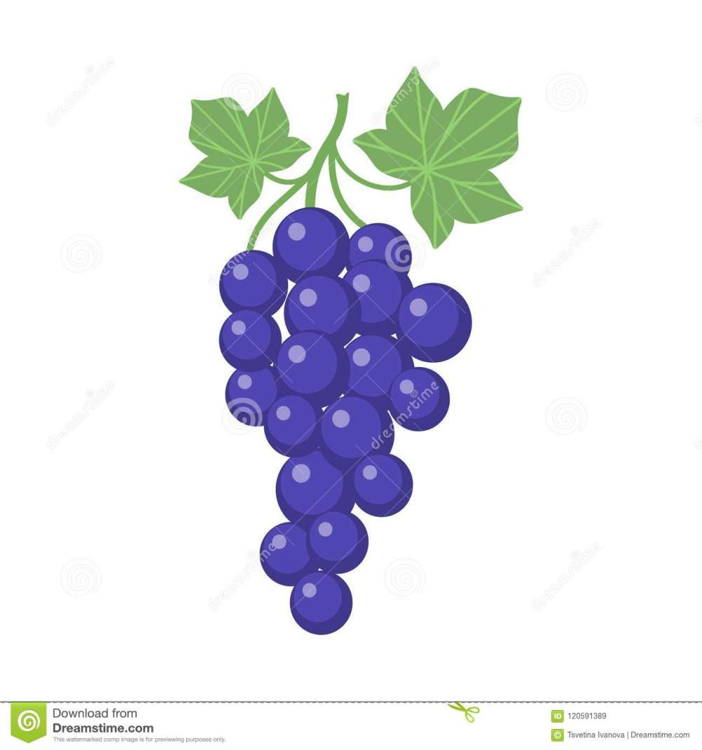 medium resolution of grapes clipart cartoon with vine and leaves purple grapevine