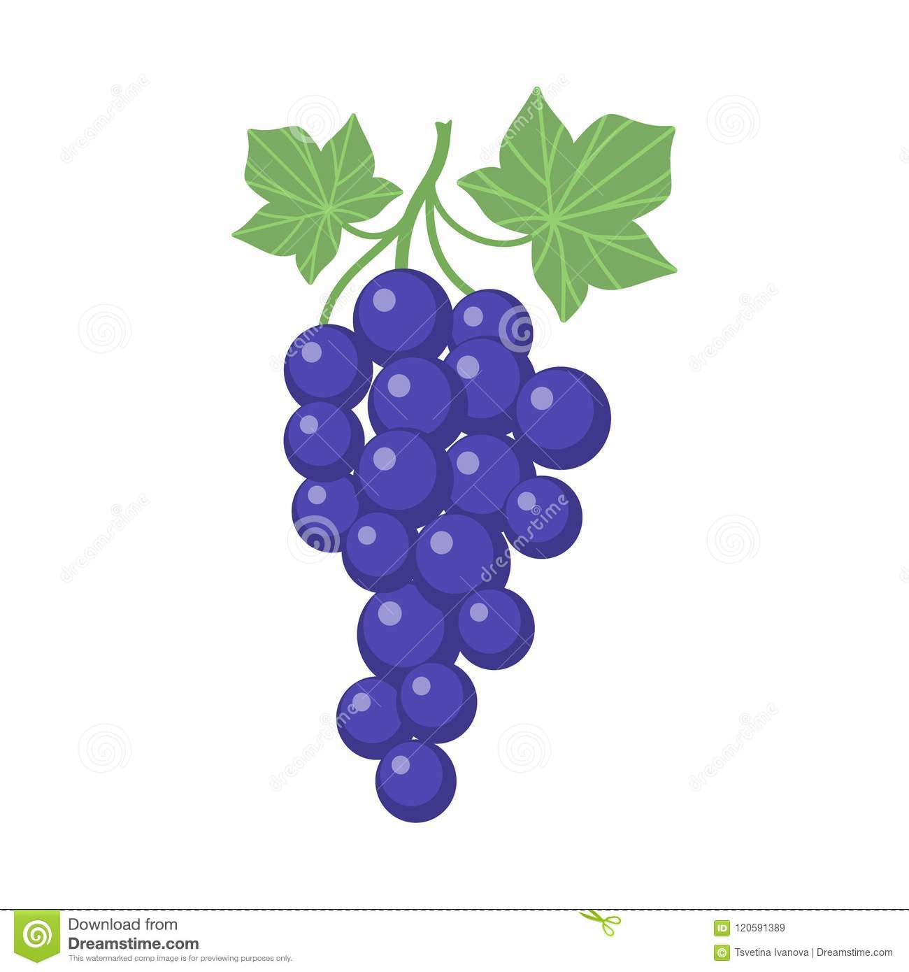 hight resolution of grapes clipart cartoon with vine and leaves purple grapevine