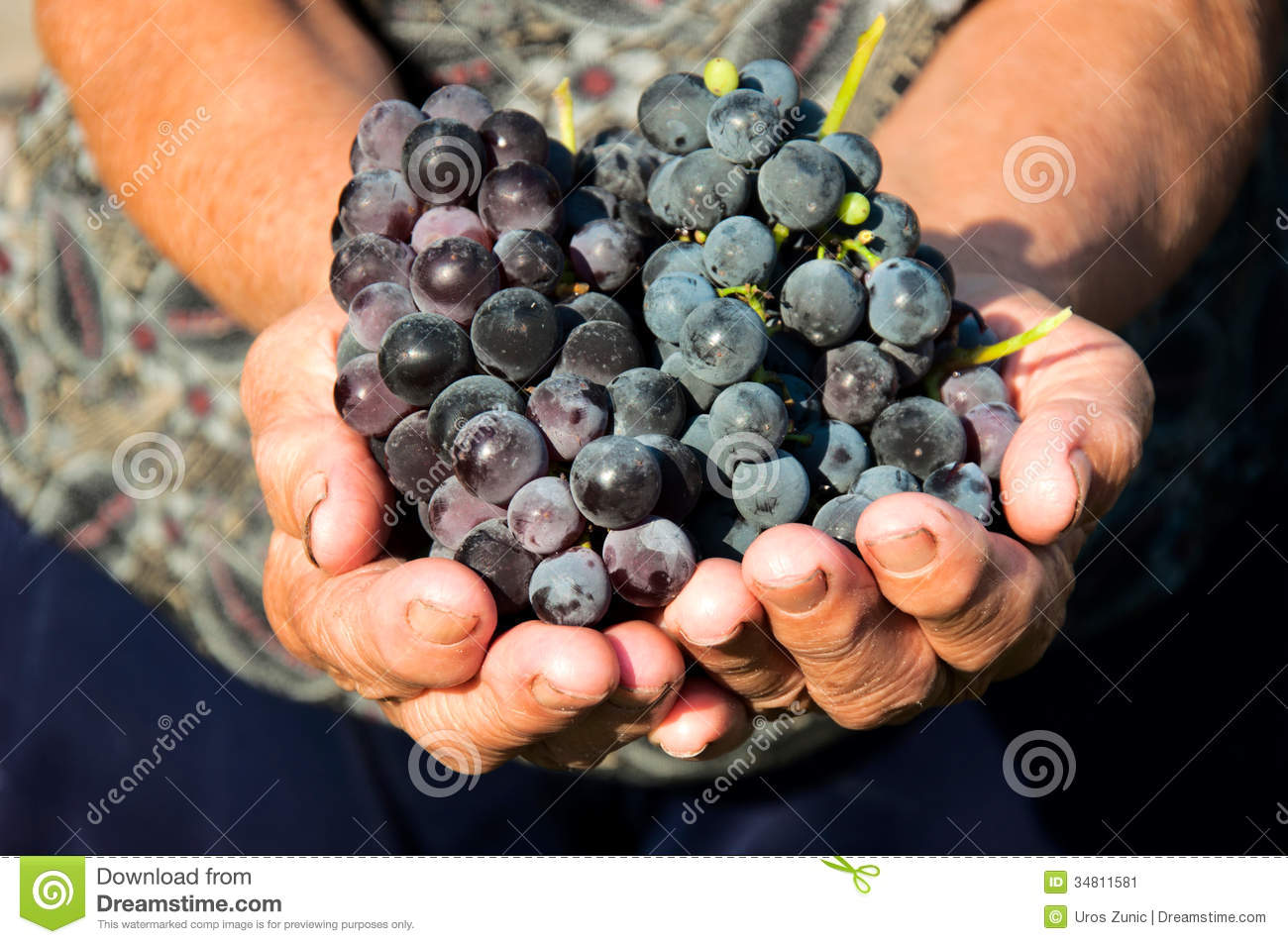 Grapes In Hands Stock Image  Image 34811581